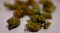 Close up shots of loose marijuana buds spread out on a piece of white paper Shots of various styles of prerolled joints and Marijuana cigarettes for...