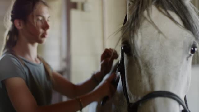 Close up slow motion panning shot of girl brushing horse / Lehi, Utah, United States