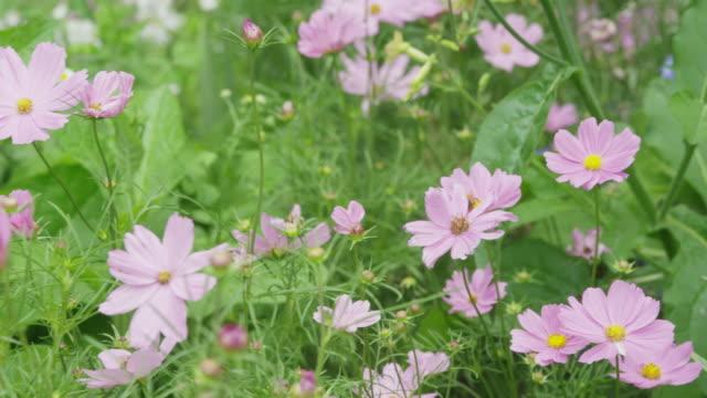 Close up slow motion panning shot of wildflowers / Lehi, Utah, United States