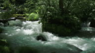 close up strong water stream and green forrest