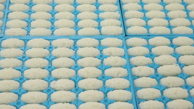 Close up sushi rice produced by a Suzumo Machinery Co sit in mold trays during a demonstration at the company's factory in Kawashima Saitama Japan on...
