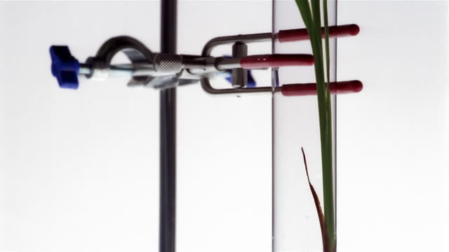 Close up tilt up studio shot of seedling in test tube clamped to stand / London