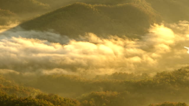 close up TL : mist sea in mountain of Thailand in the morning