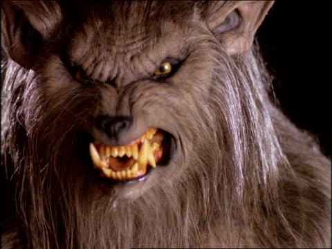 close up werewolf snarling + drooling at camera