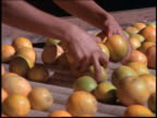 close up woman's hands sorting oranges on conveyor belt / Brazil