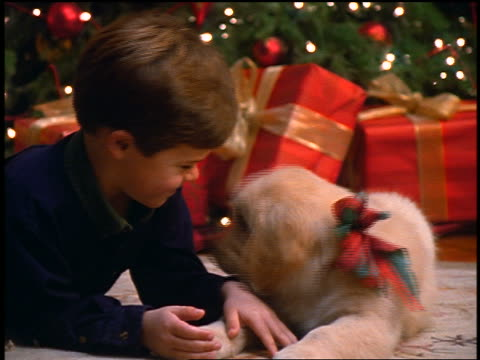 close up zoom in young boy lying on floor with puppy licking his face / Christmas tree in background