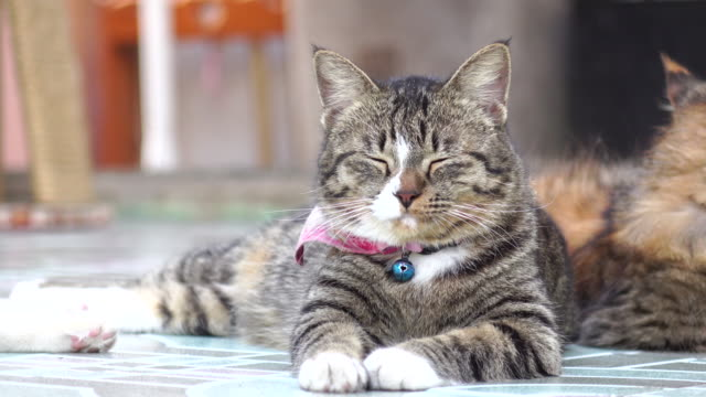 Close-up di gatto notte