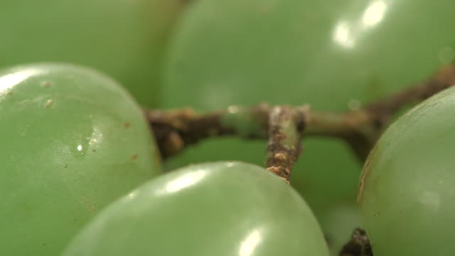 Close-up focus pull between white grapes on a stalk.