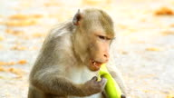 Close-up monkey