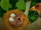 Close-up of a bird feeding its chick in a nest