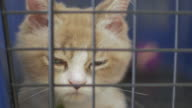 Close-up of a cat in cage looking at camera