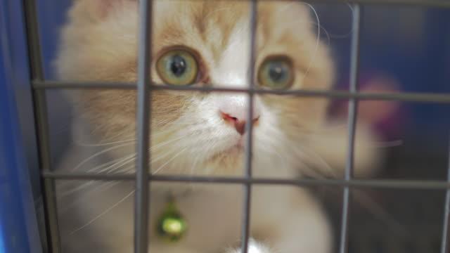 Primo piano di un gatto in gabbia che guarda macchina fotografica, 4 m