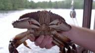 Close-up of a crab