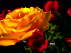 Close-up of a yellow rose among red flowers rotating in a bouquet.