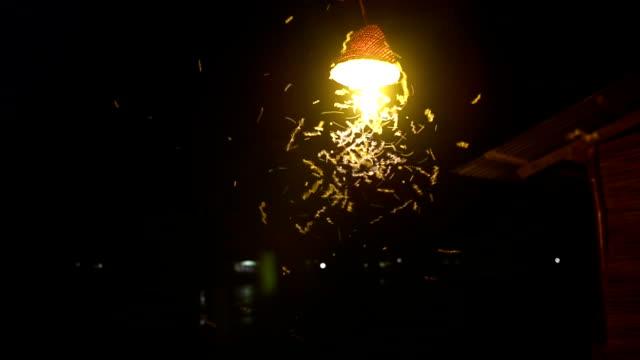 Nahaufnahme einer alten Straße Lampe mit Insekten bei Nacht