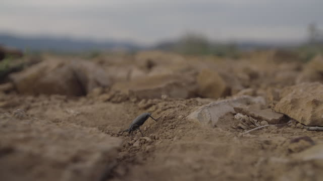 Closeup of beetle in the dirt