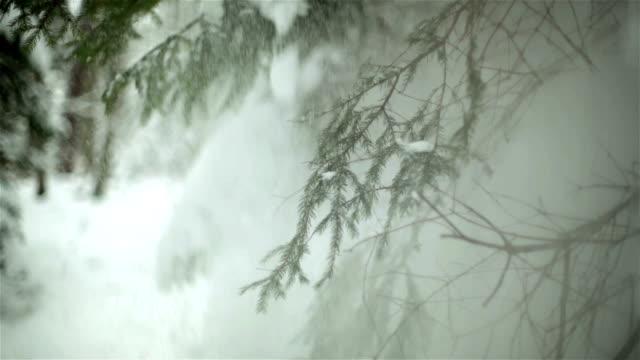Close-up di materiale congelato ramo con sfondo panoramico