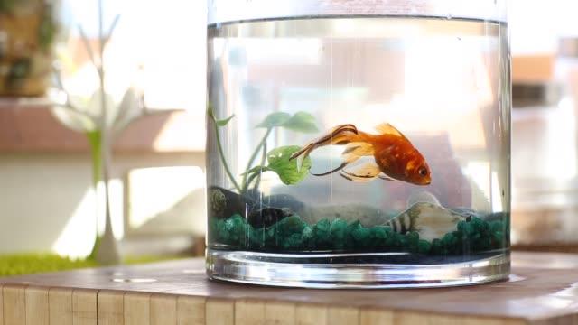 close-up of goldfish bowl