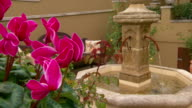 Closeup of hot pink cyclamen flower pan right to Mediterranean style water fountain and patio with potted roses