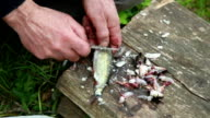 Close-up of mans hands removing fish scales off a small fish and decapitated it