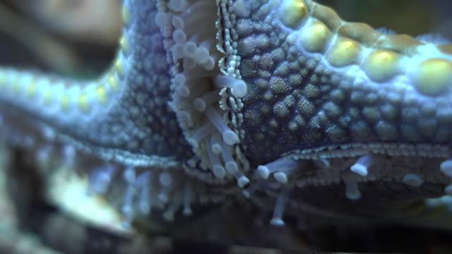 Close-Up Of Starfish At Aquarium
