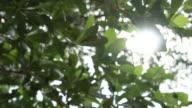 Close-up van boom verlaat met zon schijnt door