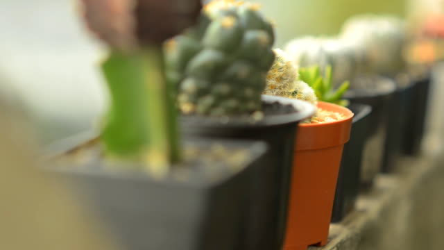 close-up panning : cactus is ordered on the edge