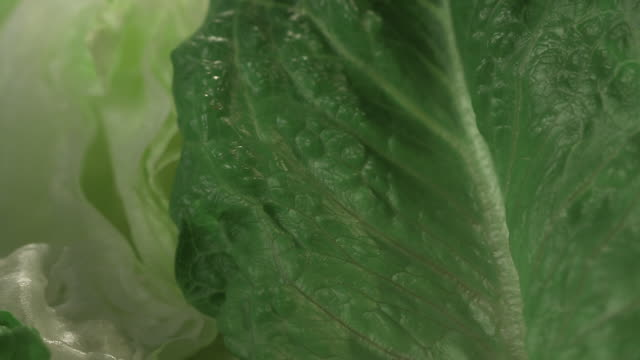 Close-up sequence showing cos and iceberg lettuce.