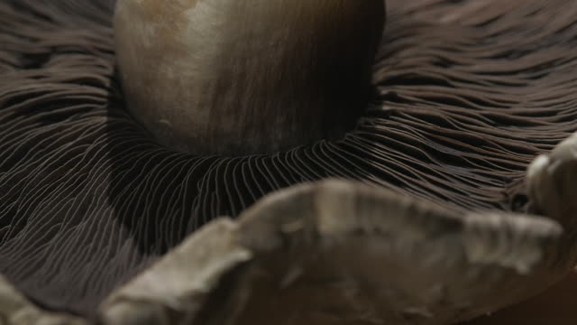 Close-up sequence showing the gills of a row of upturned portobello mushrooms on a board.