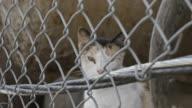 Closeup shot of a junkyard cat - slow motion