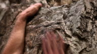 Closeup shot of a man's muscular forearms and his hands on rock.