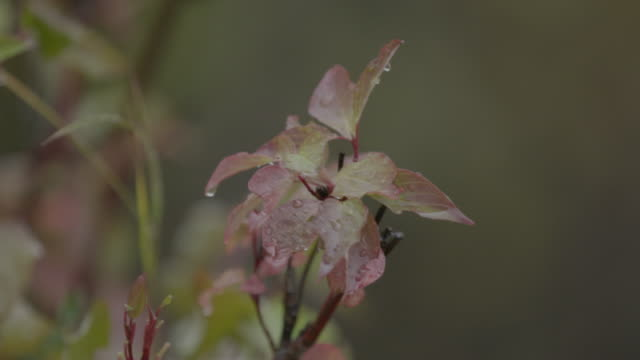 Close-up shot of a plant swaying in the wind at Lake Hood
