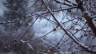 Close-up shot of a tree's branches during a snowstorm