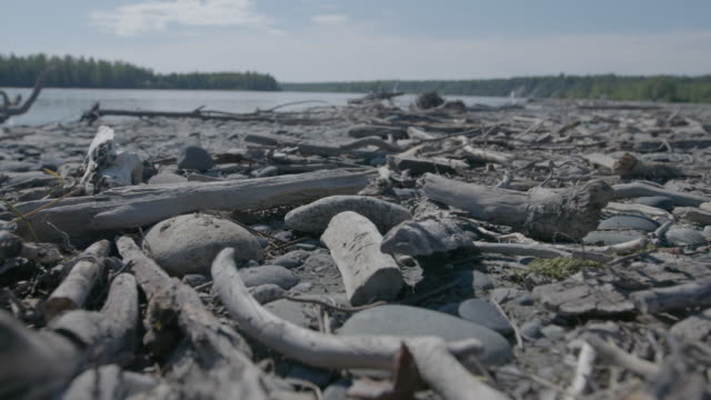 Close-up shot of driftwood on a lake shore