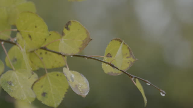 Close-up shot of leaves swaying in the wind