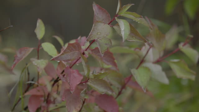 Close-up shot of plants swaying in the wind at Lake Hood
