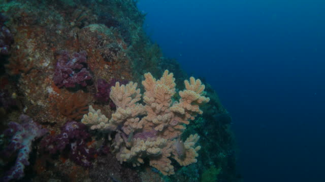 Close-up view, colorful soft coral, undersea