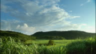 WS Clouds hovering above lush green fields with mountains in background / Montego Bay, Jamaica