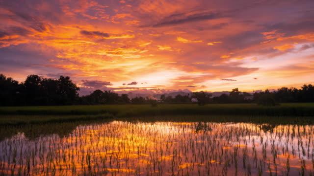 Wolken die bewegen en zonsondergang op groene paddy rijst veld time-lapse.