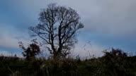 Nuvole in movimento sopra solitario albero in time lapse