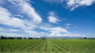 T/L, WS, Clouds over green vineyard in Blenheim, Marlborough, South Island, New Zealand
