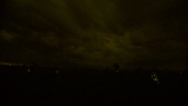 Clouds scud over termite mounds glowing due to bioluminescent beetle larvae (Pyrophorus nyctophanus).