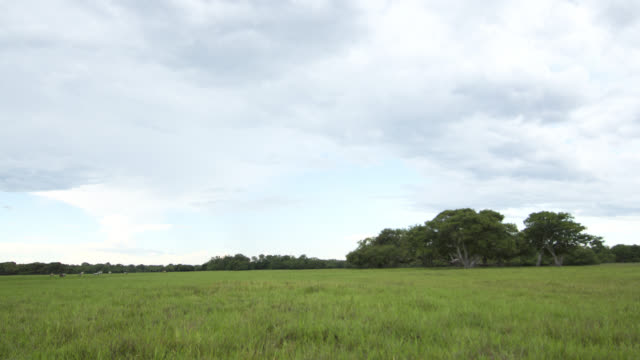 Clouds scud over trees in grassland.