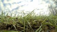 HD TIME-LAPSE: Cloudscape Over Spring Grass