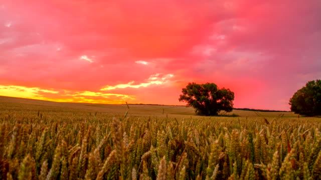T/L Wolkengebilde über Weizen Feld bei Sonnenaufgang