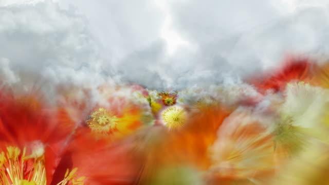 BLOOMING GERANIACEAE FIELD  - clouds/geraniaceae/clouds/white (seamless loopable)