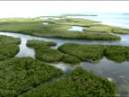 MANGROVES AERIAL Clusters of trees shrubs comprising Mangrove forest shallow water swamp vegetation w/ winding canals Ecosystem fragile habitat...
