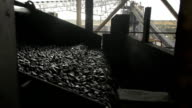 Trattamento carbone nastro trasportatore
