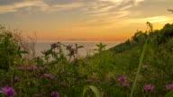 WS DS Coastal Plants At Dawn