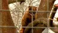 London Battersea Park Zoo EXT Coati Corner sign on hut in coati enclosure / Cage and hut with sign / Coati on branch of tree seen through wire mesh...